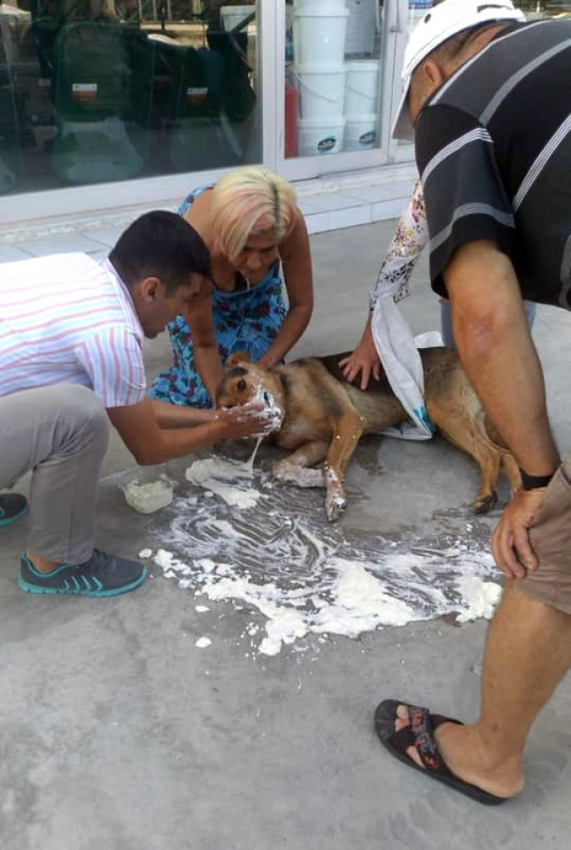 Bodrum'da onlarca kedi, köpek ve tavuk telef oldu