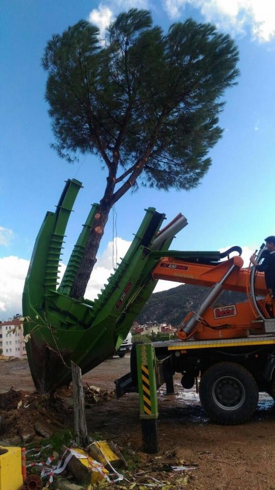 Büyükşehir'den Ağaçları Koruyan Yatırım