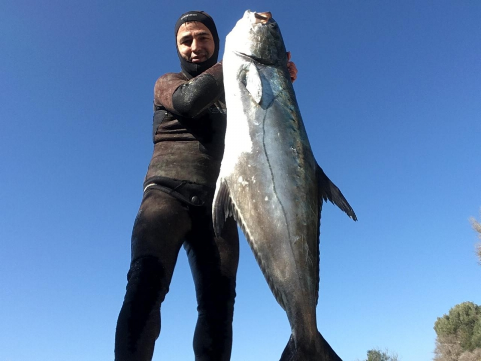 Zıpkınla 40 kiloluk liça balığı yakaladı