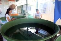 Caretta yuvaları mercek altında
