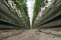 Hindistan cevizi kabuğundan üretilen domatese yoğun talep