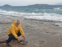 Datça'da ölü yeşil deniz kaplumbağası kıyıya vurdu