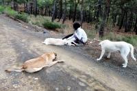 Sakinleştirici ilaç verilen 11 köpeğin sokağa bırakıldığı iddiası