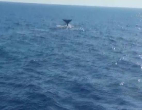Sevimli balina çifti Marmaris sularında
