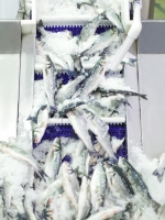 Balığı 65 ülkeye satıyor, yavrusunu uçakla taşıyor