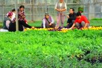 6,5 milyon çiçek onlarca aileye umut oldu