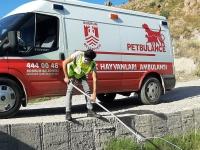 Bodrum'da yol için kapatılmaya çalışılan azmaktaki kaplumbağalar kurtarıldı