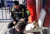 Bodrum'da polis ekibi, yaralı kediyi veterinere götürüp tedavi ettirdi