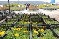 Menteşe'de bitki satışları arttı