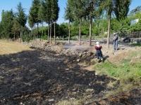 Bodrum'da çıkan yangında 5 dönüm zeytinlik zarar gördü