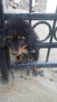 Bodrum'da demir korkuluklara başı sıkışan köpeği itfaiye kurtardı