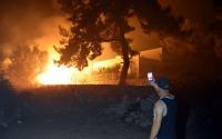 Bodrum'da tarım arazisi ve otluk alanda yangın