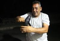Bodrum'da oltaya vantuz balığı takıldı