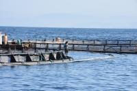 Bodrum'da balık çiftlikleri gazetecilere gezdirildi
