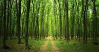 DALAMAN ORMAN İŞLETME MÜDÜRLÜĞÜ Endüstriyel ağaçlandırma arazi hazırlığı hizmeti alacak
