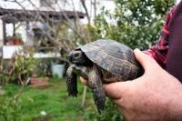 Çöpte buldukları kaplumbağa ailenin parçası oldu