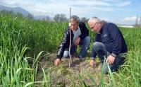 Ortaca'nın alternatif ürünü pikan cevizi