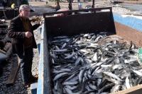 3. Dalyan Kefal Balığı Festivali 3 Mart'ta