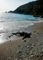 Fethiye'de denizde erkek cesedi bulundu