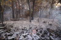 CHP'li Erbay; Muğla'da yanan alanların ranta açılmasına izin vermeyeceğiz