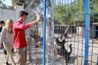 Barınak görevlilerine kızıp kafesteki köpekleri salıverdi