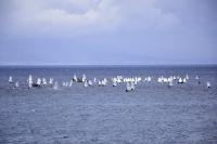 Yelken Muğla İl Birinciliği 2. Ayak Yarışları başladı