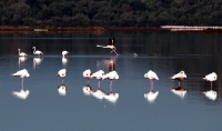 Tuzla Sulak Alanı göçmen kuşları ağırlıyor