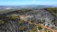 Bodrum'da yanan  ormanlık alan havadan görüntülendi
