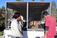 Fethiye'de sokak köpeklerinin kamyonla dağa bırakıldığı iddiası