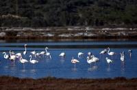 Tuzla Sulak Alanı'na göçmen kuş akını