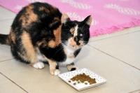 Vokalist Özlem, internetten sahiplendiği gözleri görmeyen kedilere ışık oldu