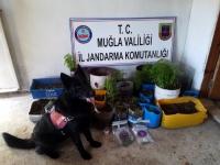 Muğla'da uyuşturucu operasyonu BİR TUTUKLU