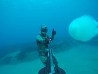 Akdeniz'de dev denizanalarının göçü