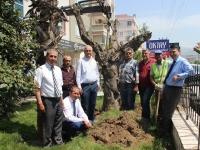 200 yaşındaki zeytin ağacını kurtardı, MİTSO'ya hediye etti