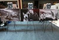 Hayvanlar ve Biz' Sergisi Bodrum'da Açıldı