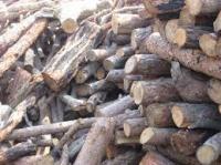 200 ton kömür ile 80 ton çam odunundan tutuşturmalık tahta parçası alınacak