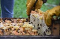 Kovid-19 arı ürünlerine talebi artırdı