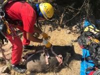 Kuyuda mahsur kalan yaban domuzu AKUT kurtardı