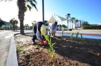 GMK Bulvarı'nda ağaçlandırma ÇALIŞMALARI SÜRÜYOR