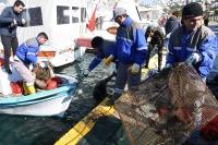 Bitez'de Deniz Dibi Temizliği Yapıldı