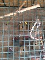 Yaban hayvanlarını kafese kapatmış!
