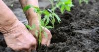 5. Tohum ve Fide Şenliği bu Pazar Menteşe'de