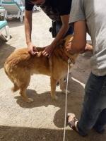 Bitez'de sokak hayvanları aşılandı