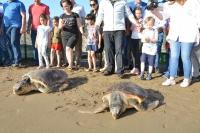 İyileşen caretta carettalar denizle buluştu