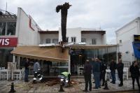 Bodrum'da dev palmiye ağacı köfteci dükkanının çatısına devrildi